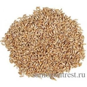 Солод ячменный зерновой Пилсен (Pilsen)